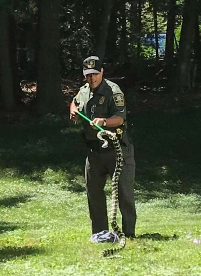 A state Environmental Conservation Police Officer Edward Yescott responded to an Avon homeowner's report of  a Jungle Carpet Python sunning itself in the yard Saturday, July 21, 2018. Photo: Contributed / Connecticut State Environmental Conservation POlice