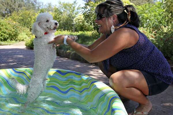 Pets Need Protection From South Texas Heat Expressnewscom
