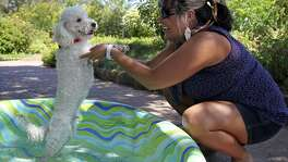 "Ivonne Rodriguez talks with ""Butters"" while he enjoys some relief in a pool of water as the San Antonio Botanical Garden hosts "" Dog Days of Summer"" to benefit the Humane Society of San Antonio on August 6, 2011."