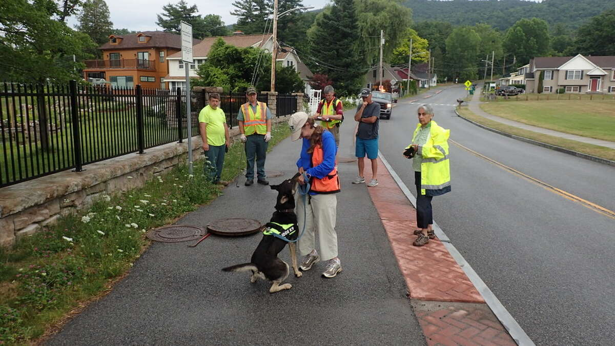 Kai, a three-year-old hound/shepherd mix, alerts his handler, Laura Suomi-Lecker, taht his has smelled sewage backteria at a stormdrain pipe in Lake George near Million Dollar Beach.