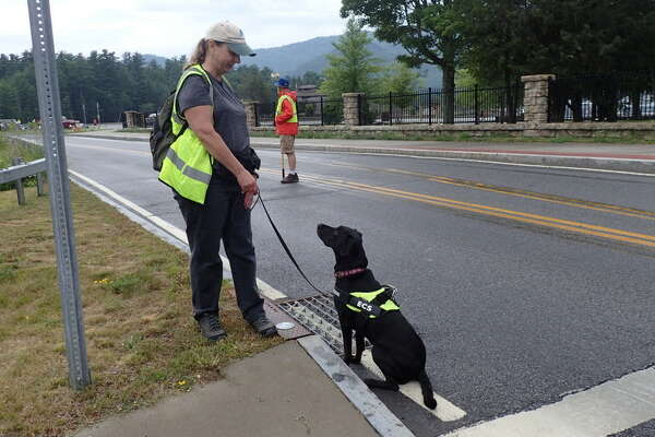 Dogs sniff out mysterious Lake George sewage leak