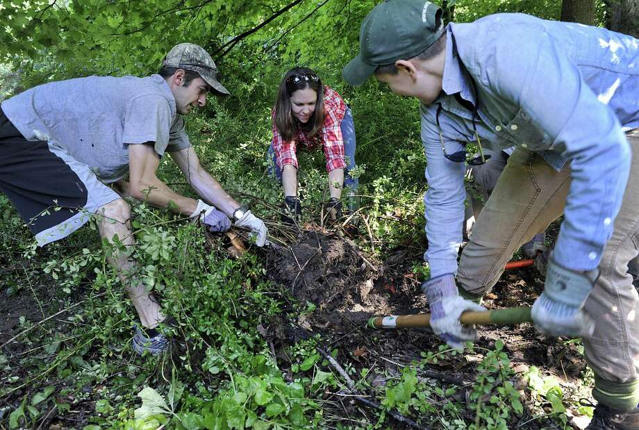 From left, Jake Parise, of Berlin, Carrie Davis of Bethel, assistant director of land conservation at the Weantinoge Heritage Land Trust and Courteny Morehouse, conservation projects manager for the Housatonic Valley Association, are part of a group removing Japanese barberry, invasive growth along the Still River in New Milford Wednesday, July 18, 2018. Photo: Carol Kaliff / Hearst Connecticut Media / The News-Times