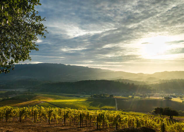 Sonoma Valley wineries that should be on your radar