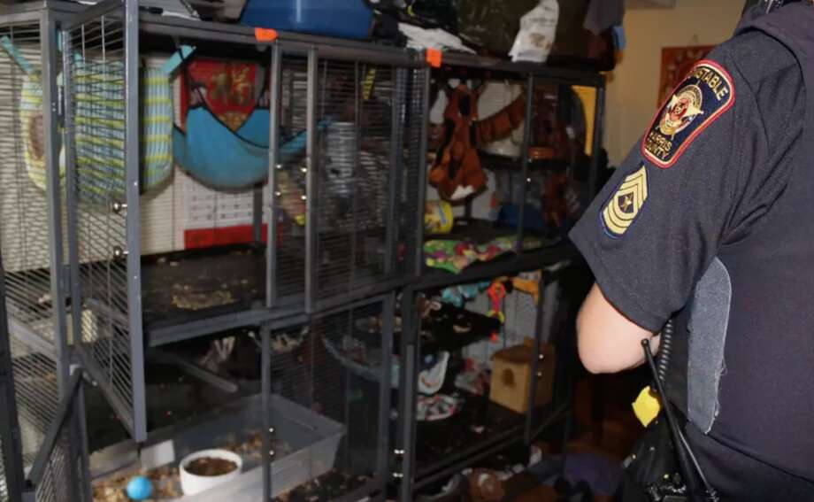 Deputies seized more than 100 animals living in tight quarters inside a southwest Houston apartment Tuesday, July 24, 2018. Photo: Harris County Precinct 5 Constable's Office