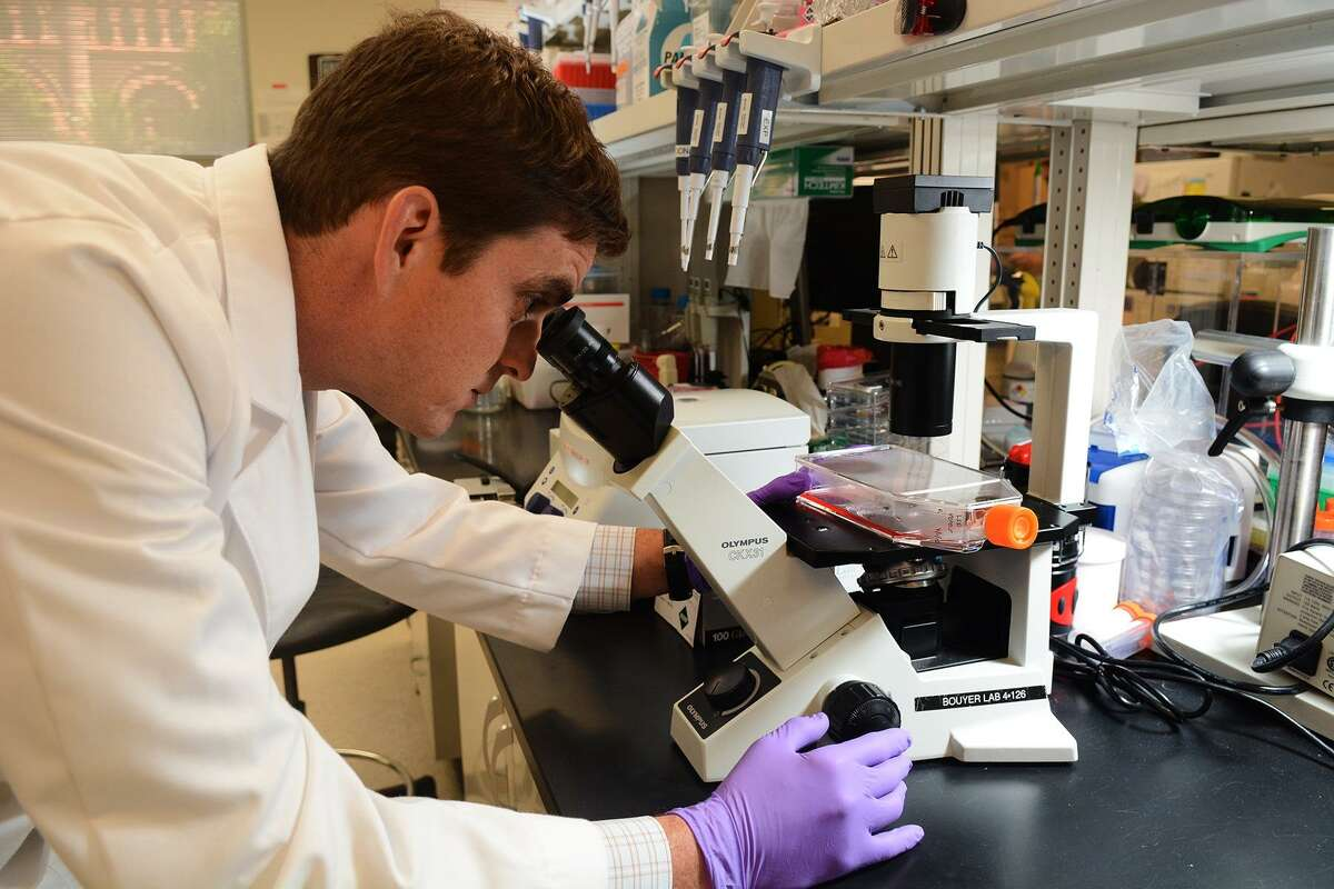 """This file photos shows Dr. Lucas Blanton, a local infectious disease specialist, looking at a cell culture flask at the University of Texas Medical Branch in Galveston in 2015. Commenting on the uptick in typhus cases in Texas, Blanton said """"it's possible that dogs and cats are acting as sort of a vehicle for the fleas to enter homes or to ignite an infestation of the home."""""""