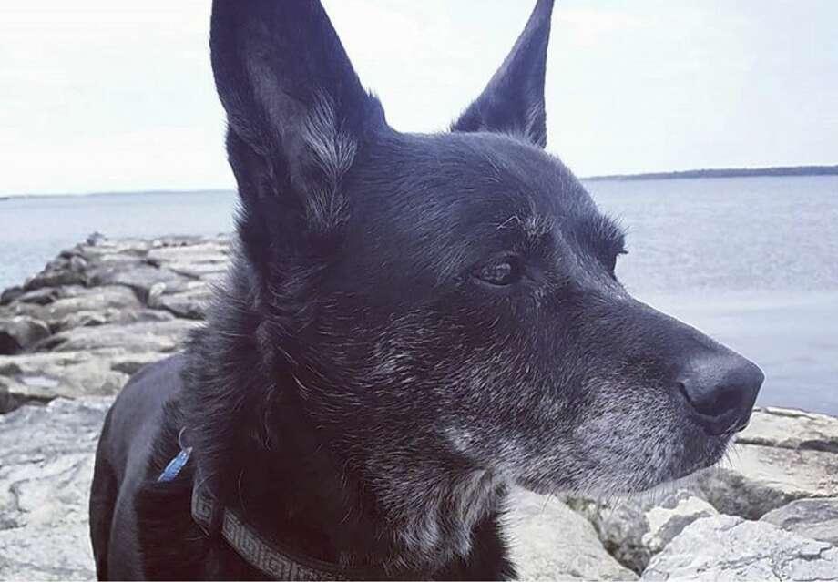 Buster the dog. Photo: Courtesy