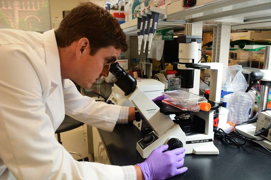 """This file photos shows Dr. Lucas Blanton, a local infectious disease specialist, looking at a cell culture flask at the University of Texas Medical Branch in Galveston in 2015. Commenting on the uptick in typhus cases in Texas, Blanton said """"it's possible that dogs and cats are acting as sort of a vehicle for the fleas to enter homes or to ignite an infestation of the home."""" Photo: Jerry Baker /for The Houston Chronicle"""