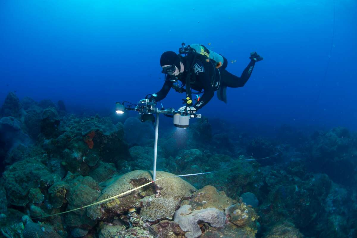 As the researcher swims along the transect, he takes photos at specified distances for later examination. The Flower Garden Banks National Marine Sanctuary is a 56-square mile reef system about 100 miles off the coast of Galveston.