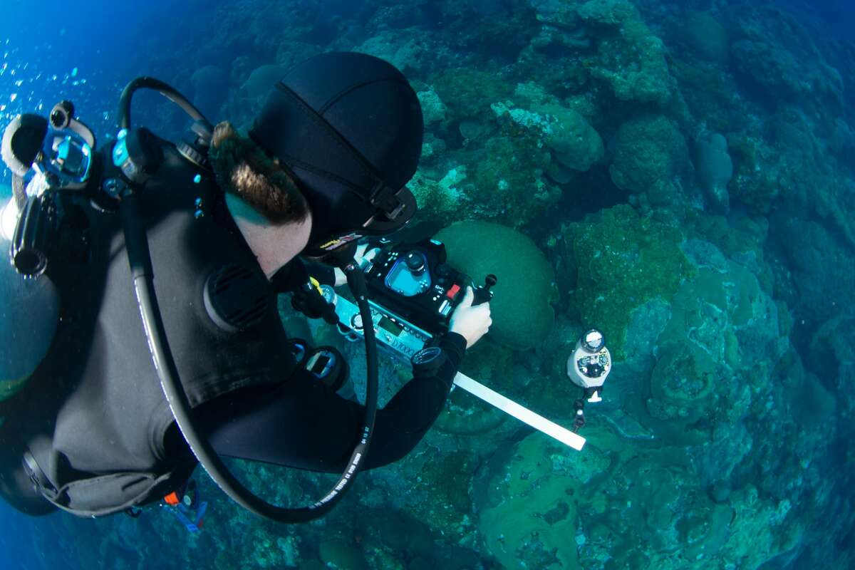 A research diver lines up a camera mounted on a t-frame to take a photo at a coal reef.Houstonians will have a chance to experience what it's like to see their own actions destroy coral reefs through an art exhibit that starts Thursday night in downtown.