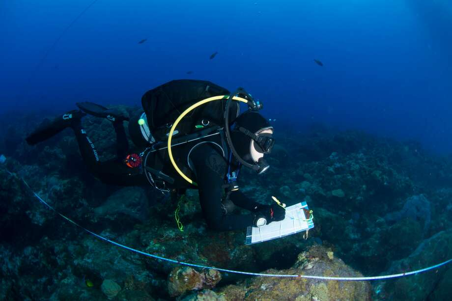 The transect lines are used to assess a variety of aspects regarding the reef. This researcher is conducting a fish survey as she swims along the transect line. Photo: G.P. Schmahl/Courtesy NOAA