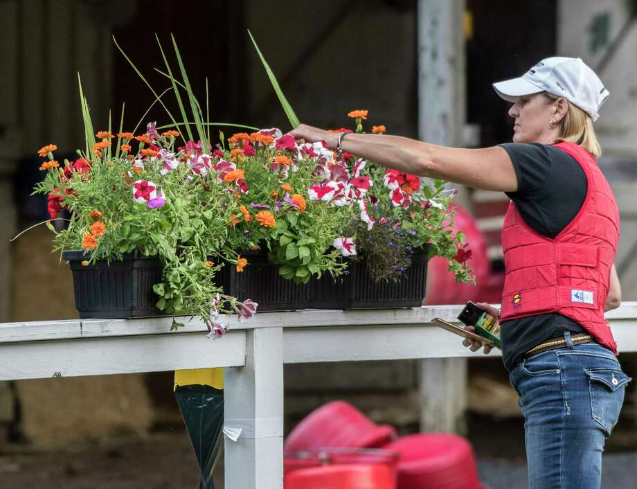Speedy diversify might go to the whitney but probably not times union assistant trainer tracy wilkes does a little plant management in the ian wilkes training barn area mightylinksfo