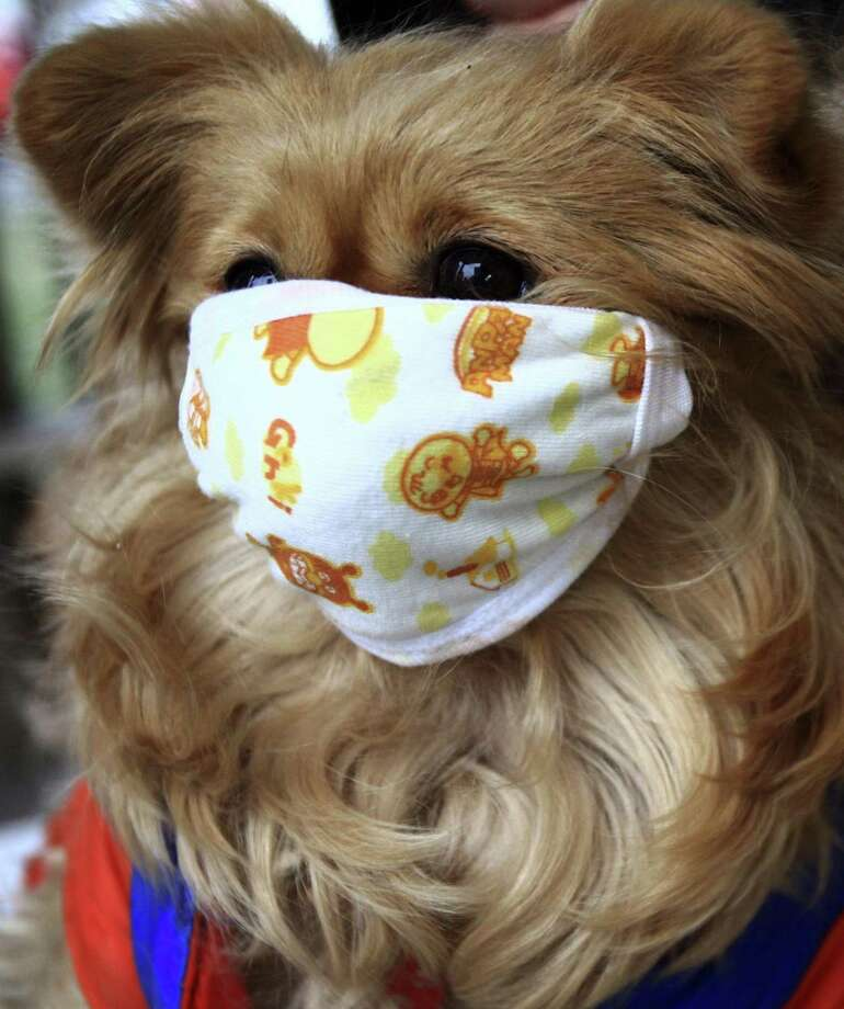 A pet dog wearing a mask after two dogs were infected with H1N1 flu virus in Beijing in 2009. Photo: AP File Photo / AP2009