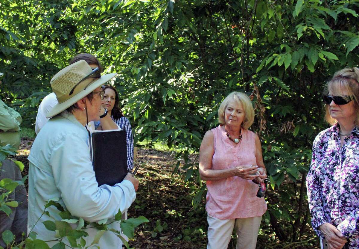 Sandra Anagnostakis, in hat, talks with members of the Fairfield Garden Club about the health of the American chestnut trees they planted in 2012.