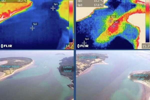 Sprawling algae bloom spotted near Lummi Island