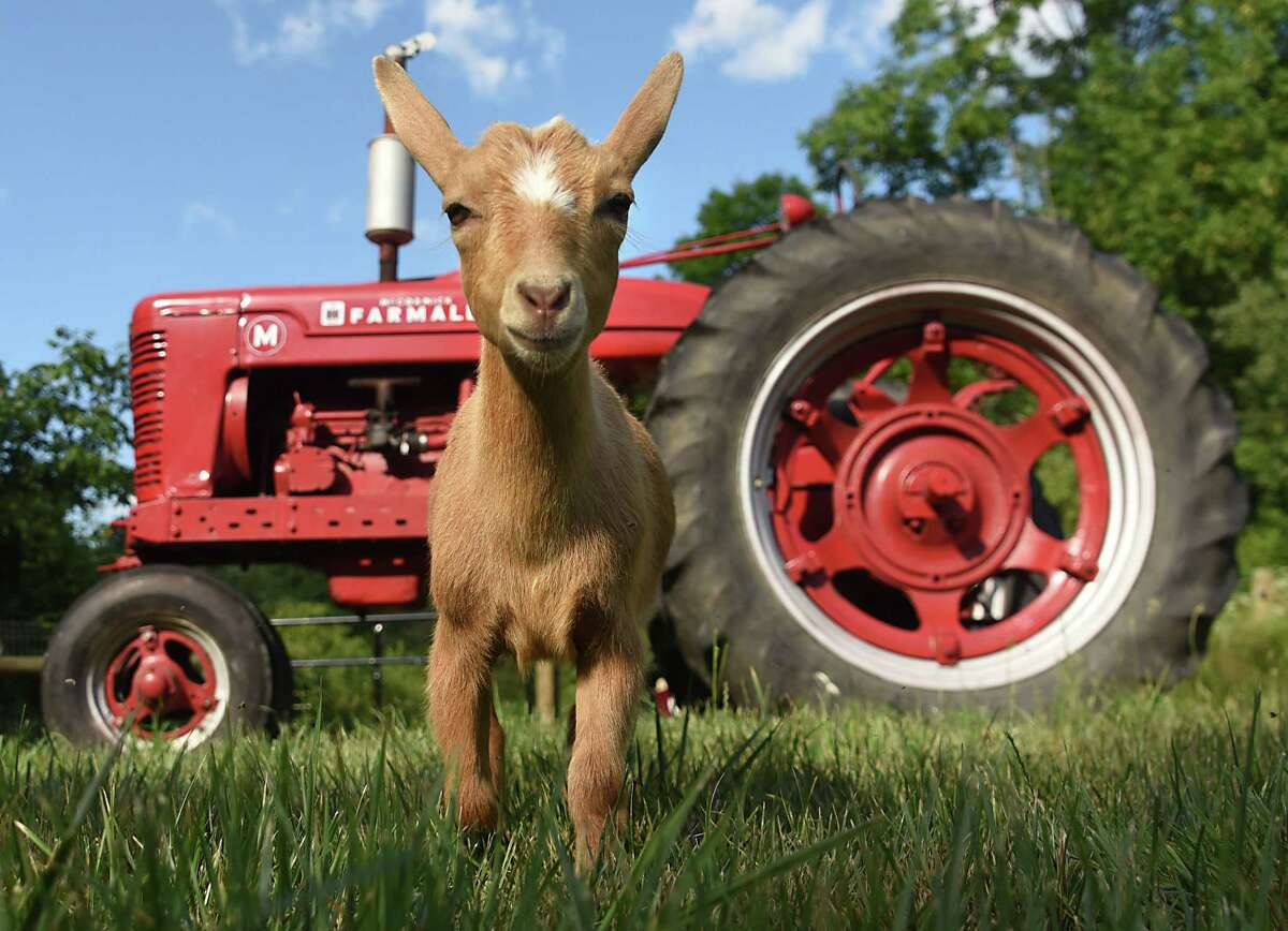 June Farms in West Sand Lake, the latest project from area entrepreneur Matt Baumgartner, is a farm-to-table restaurant/bar in a bucolic setting. But it's also a place where you can sleep in a log cabin, visit with the animals, and even do some goat yoga. Read our review.