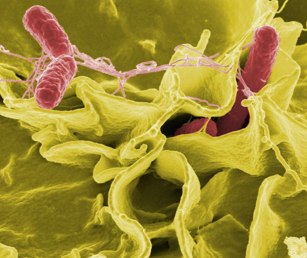 The U.S. Centers for Disease Control & Prevention estimates salmonella causes about 1.2 million illnesses, 23,000 hospitalizations and 450 deaths in the United States every year.