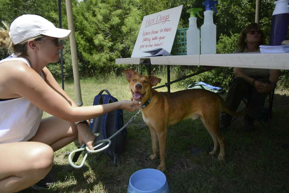 """Becca Tudor encourages her dog, Jason, to come out from under the shade of a """"Hot Dog Pop-Up"""" tent at Government Canyon State Natural Area on Saturday, July 28, 2018. The dog was reluctant to walk in the hot afternoon, so Tudor drove him back home. Photo: Billy Calzada, Staff / Staff Photographer / Billy Calzada"""