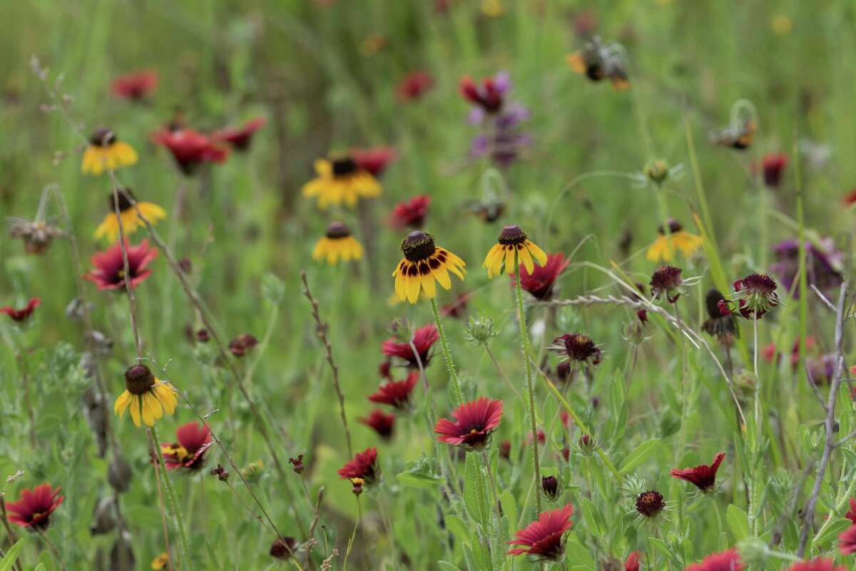 The Katy Prairie Conservancy is applying for renewal of accreditation through the Land Trust Accreditation Commission.