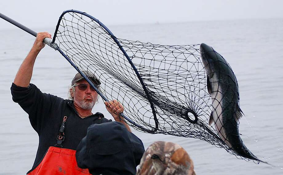 First mate Tony Broglio nets a salmon at the rail, hooked and fought with rod-and-reel on the boat Sundance out of Emeryville Photo: Tom Stienstra / Capt. RJ Waldron / Special To The Chronicle