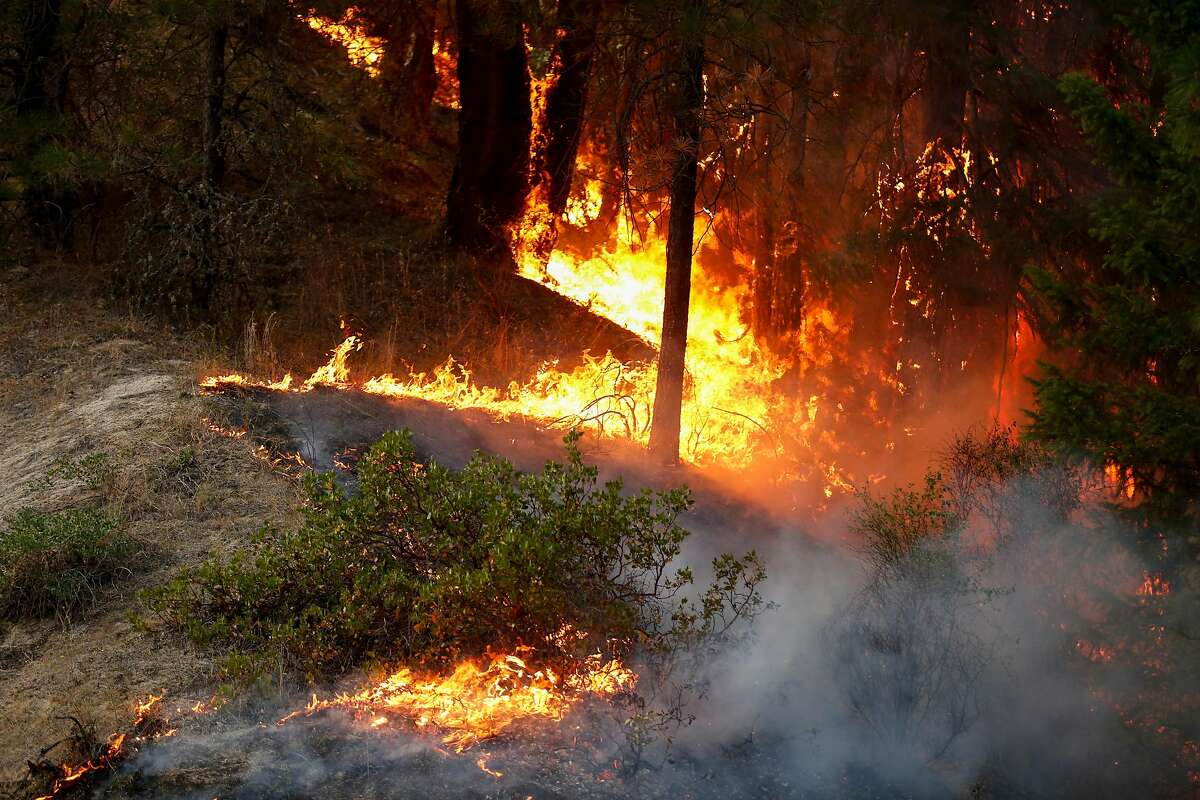 Trees burn in the Carr Fire on July 30, 2018 west of Redding, California. Six people have died in the massive fire, which has burned over 100,000 acres and forced thousands to evacuate since it began on July 23.