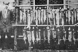D.P. Burke, S.w. Delamarter, and A.J. Green of Coleman, M. and results of four hours of fishing in Pine River. 1900-1920s