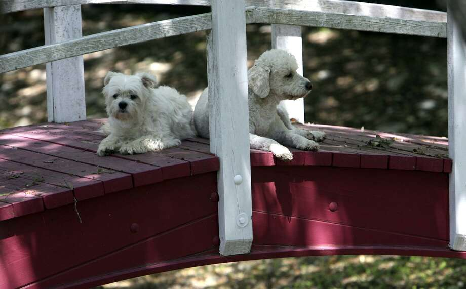 O.Z., left, and Max rest in the shade in North West San Antonio April 12, 2007. Unfortunately, many San Antonio dogs kept in yards are without access to shade, which could change with a new ordinance. Photo: Robert McLeroy /San Antonio Express-News / San Antonio Express-News