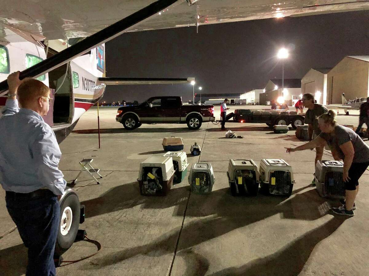 Dr. Peter Rork, pilot and co-founder of Dog is my CoPilot, watches San Antonio Pets Alive! staff members and volunteers prepare to put more than 40 former stray dogs on his Cessna bound for Idaho and awaiting adopters.
