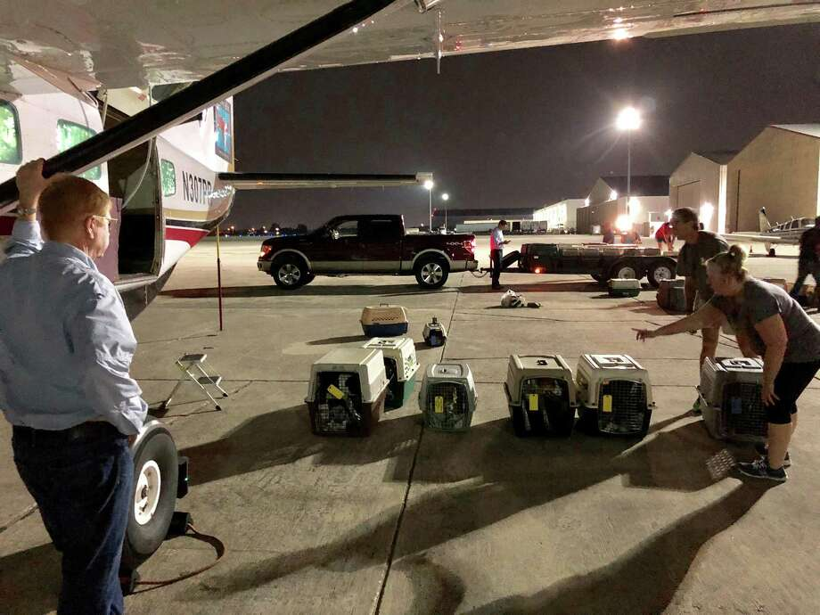 Dr. Peter Rork, pilot and co-founder of Dog is my CoPilot, watches San Antonio Pets Alive! staff members and volunteers prepare to put more than 40 former stray dogs on his Cessna bound for Idaho and awaiting adopters. Photo: Vincent T. Davis