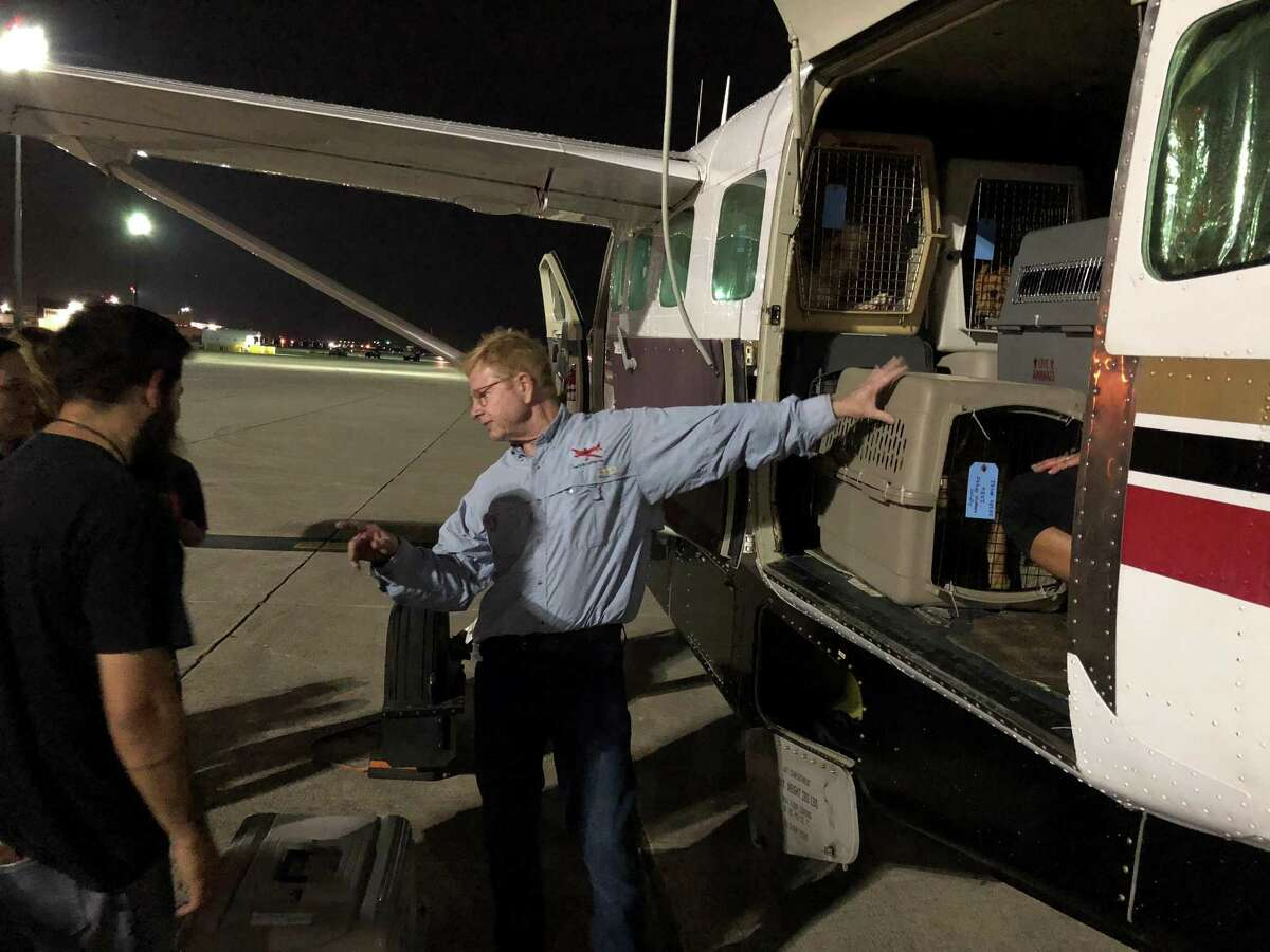 Dr. Peter Rork, pilot and co-founder of Dog is my CoPilot,coordinates withSan Antonio Pets Alive! staff members and volunteers as they put more than 40 former stray dogs on his Cessna bound for Idaho and awaiting adopters.