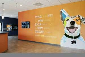 A proposed Dogtopia franchise in The Woodlands has been called off after the owner says he believes businesses are treated poorly by the township Development Standards Committee. The chairman of the DSC, Walter Lisiewski, said those claims are false and said the business was unable to open in the building it was proposed for because the usage rules prohibit dog-type businesses.