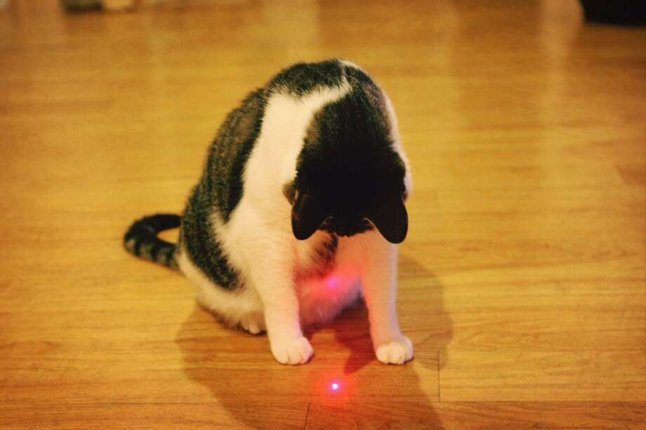 A cat playing with a laser pointer. Photo: J1 Lee / EyeEm /Getty Images / This content is subject to copyright.