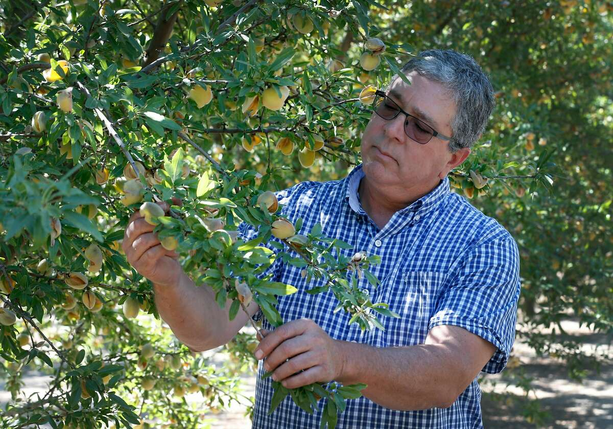 Jon Camacho inspects his crop of 1,300 almond trees on 10 acres of orchard at his farm in Ripon, Calif. on Wednesday, Aug. 1, 2018. Camacho, anticipating as much as 30,000 pounds of almonds in the upcoming harvest, is concerned that tariffs threatened by China in the trade dispute with the United States could affect his bottom line.