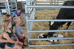 Thursday's Huron Community Fair included the beef and goat shows and action in the miracle of life tent.