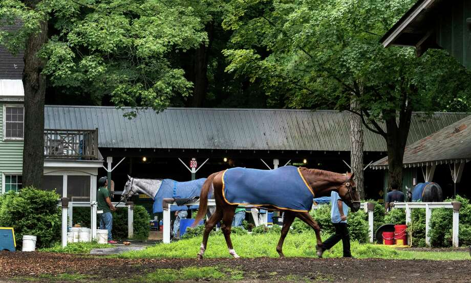 A beautiful scene as horses cool our after morning exercise in the barn area of trainer John Kimmell at the Saratoga Race Course Thursday Aug. 2, 2018 in Saratoga Springs, N.Y. (Skip Dickstein/Times Union) Photo: SKIP DICKSTEIN