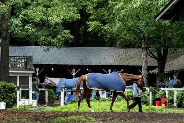 A beautiful scene as horses cool our after morning exercise in the barn area of trainer John Kimmell at the Saratoga Race Course Thursday Aug. 2, 2018 in Saratoga Springs, N.Y. (Skip Dickstein/Times Union)