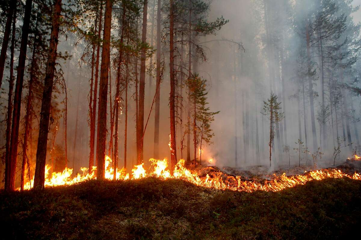 Fire burns in Karbole, Sweden, on July 15, 2018. Due to the dry weather, 80 wildfires burned in Sweden. / AFP PHOTO / TT News Agency / Mats ANDERSSON / Sweden OUTMATS ANDERSSON/AFP/Getty Images