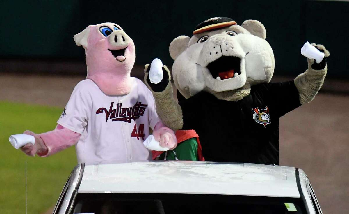 Tri-City ValleyCats mascots Ribbie, left, and Southpaw toss T-shirts to fans during a game in 2018. Team officials learned Wednesday that the ValleyCats would be among the teams losing their affiliation with Major League Baseball. (Hans Pennink / Special to the Times Union)