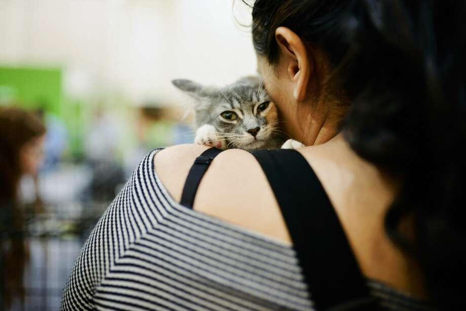 PASADENA, CA - AUGUST 04:  An attendee holds a cat at the adoption center at CatCon Worldwide 2018 at Pasadena Convention Center on August 4, 2018 in Pasadena, California.  (Photo by Chelsea Guglielmino/Getty Images) Photo: Chelsea Guglielmino/Getty Images