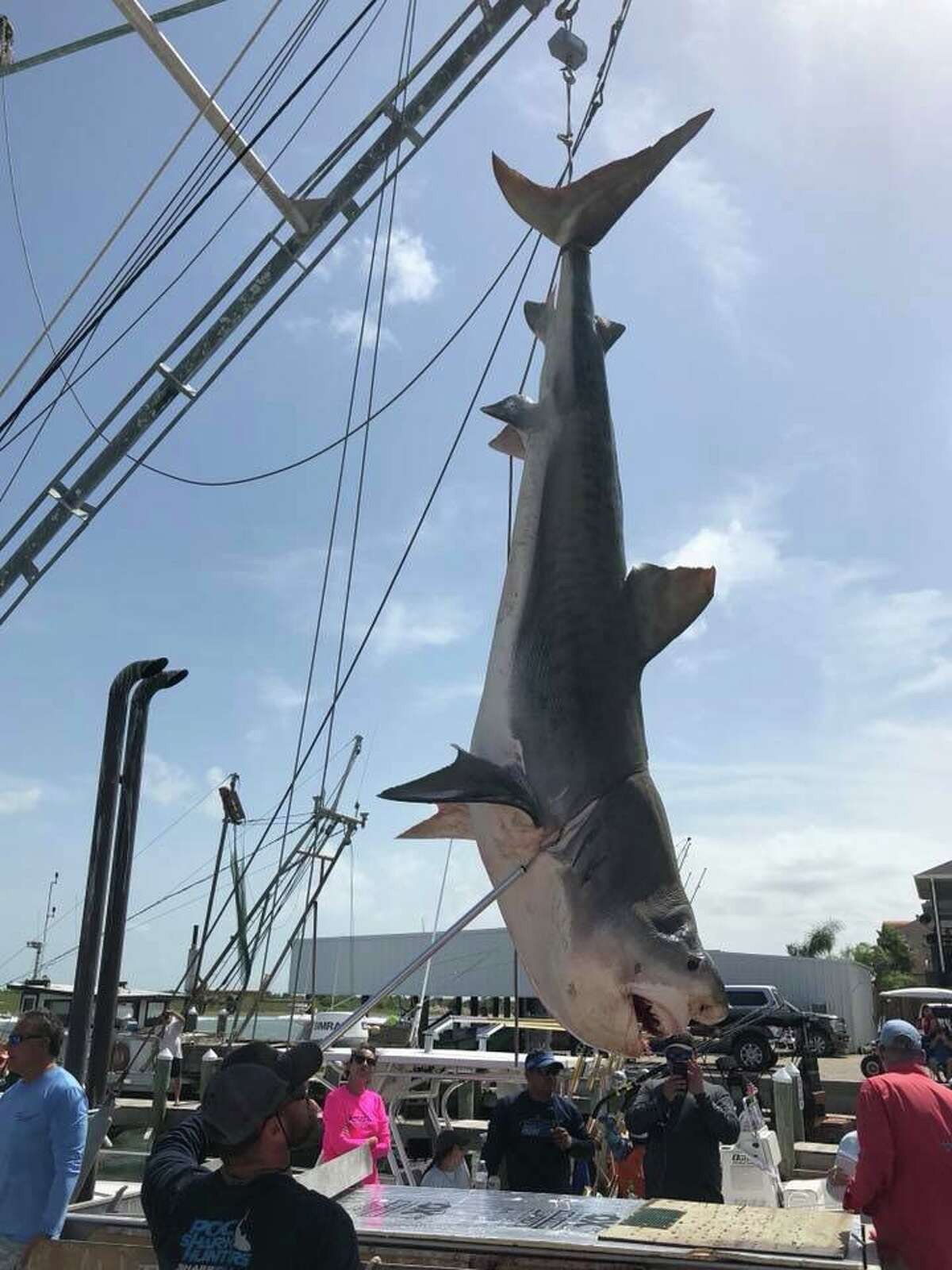 A team of anglers participating in a Port O'Connor fishing tournament reeled in a 12-foot tiger shark on Saturday, Aug. 4, 2018.