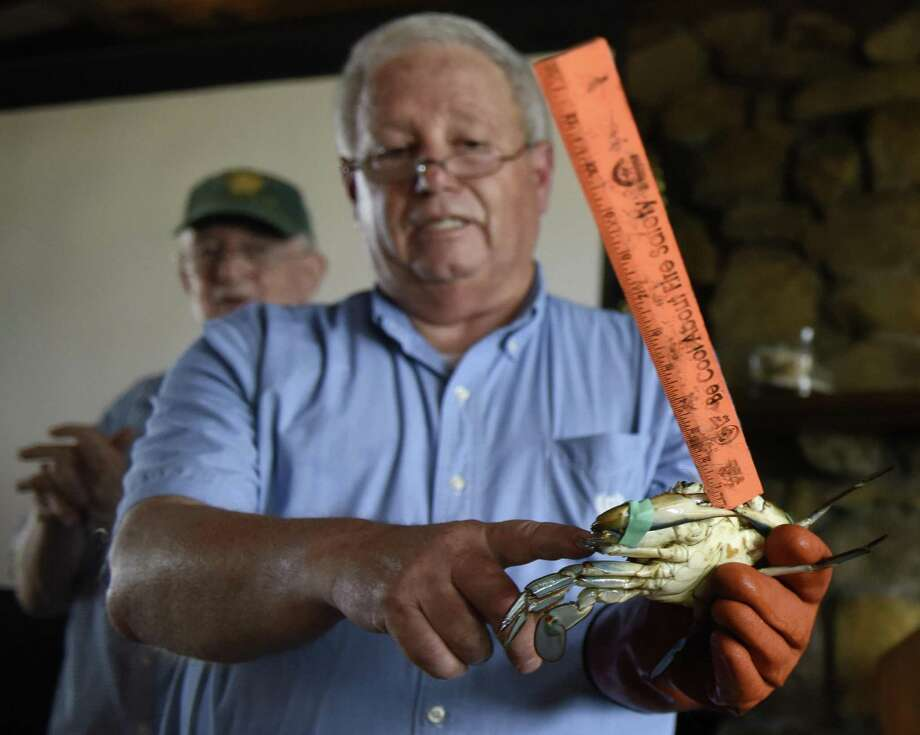 Tim Visel, Coordinator at New Haven's Sound School, shows a blue crab gripping a ruler in its claw during the Science Sunday presentation on blue crabs at Greenwich Point Park's Seaside Center in Old Greenwich on Sunday. Presented by the Bruce Museum and Greenwich Shellfish Commission, the presentation discussed the population changes, new discoveries, and trapping methods of blue crabs. Photo: Tyler Sizemore / Hearst Connecticut Media / Greenwich Time