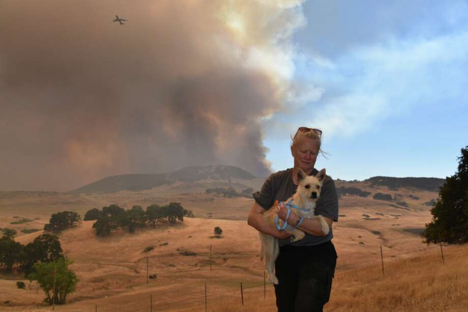 The ASPCA and Lake County AC&C have assisted more than 2,500 animals impacted from fires in Lake and Mendocino counties since wildfires began raging around California early in the summer. Photo: ASPCA