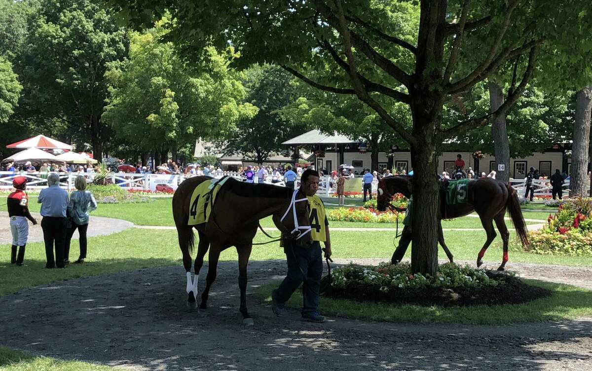 Before each race, horses that are running head to the Saratoga paddock, where they are saddled and then have a brief warmup as they are walked around the trees. Here is part of the scene before the first race as Bon Raison (4) and Cookie Crisp (5) get ready for the 11/8-mile opener. Bon Raison, who is trained by Todd Pletcher and ridden by Luis Saez, won the opener and paid $6.60. (Tim Wilkin/Times Union)