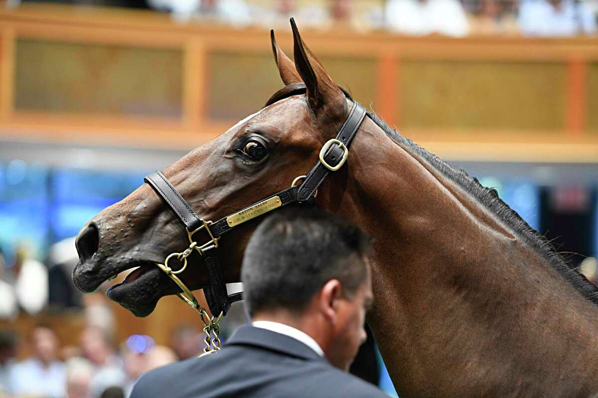 A colt by Carpe Diem out of Lemonette speaks to the crowd at the Fasig-Tipton Sales of Select Yearlings Monday Aug. 6, 2018 in Saratoga Springs, N.Y.(Skip Dickstein