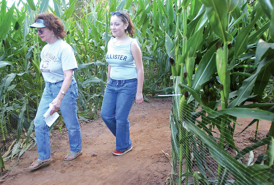 Deb Crego (left) and Annie Schneider, 13, look for the way out Monday at Lyman Orchards' corn maze in Middlefield.  The maze is open through Halloween and Lyman Orchards hopes to raise $100,000 cumulatively from money raised between the year 2000 and 2004 for the American Cancer Society.......J. Rossi photo......09.06.04. Photo: Middletown Press File Photo