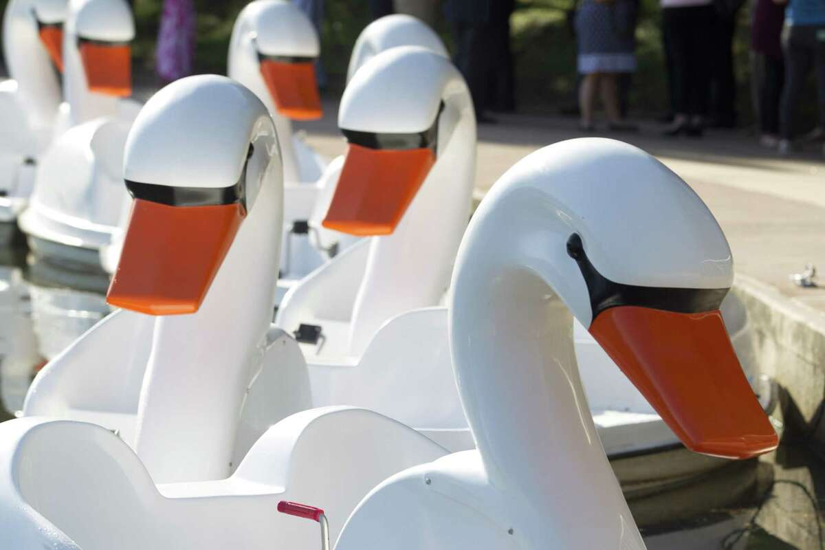 Ten swan paddleboats costing $57,000 were unveiled at Riva Row Park on Tuesday, Aug. 7, 2018, in The Woodlands.