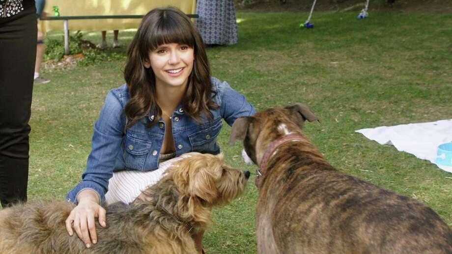 """Nina Dobrev stars with various cute canines and humans in """"Dog Days."""" Photo: Jacob Yakob / LD Entertainment / LD Entertainment"""