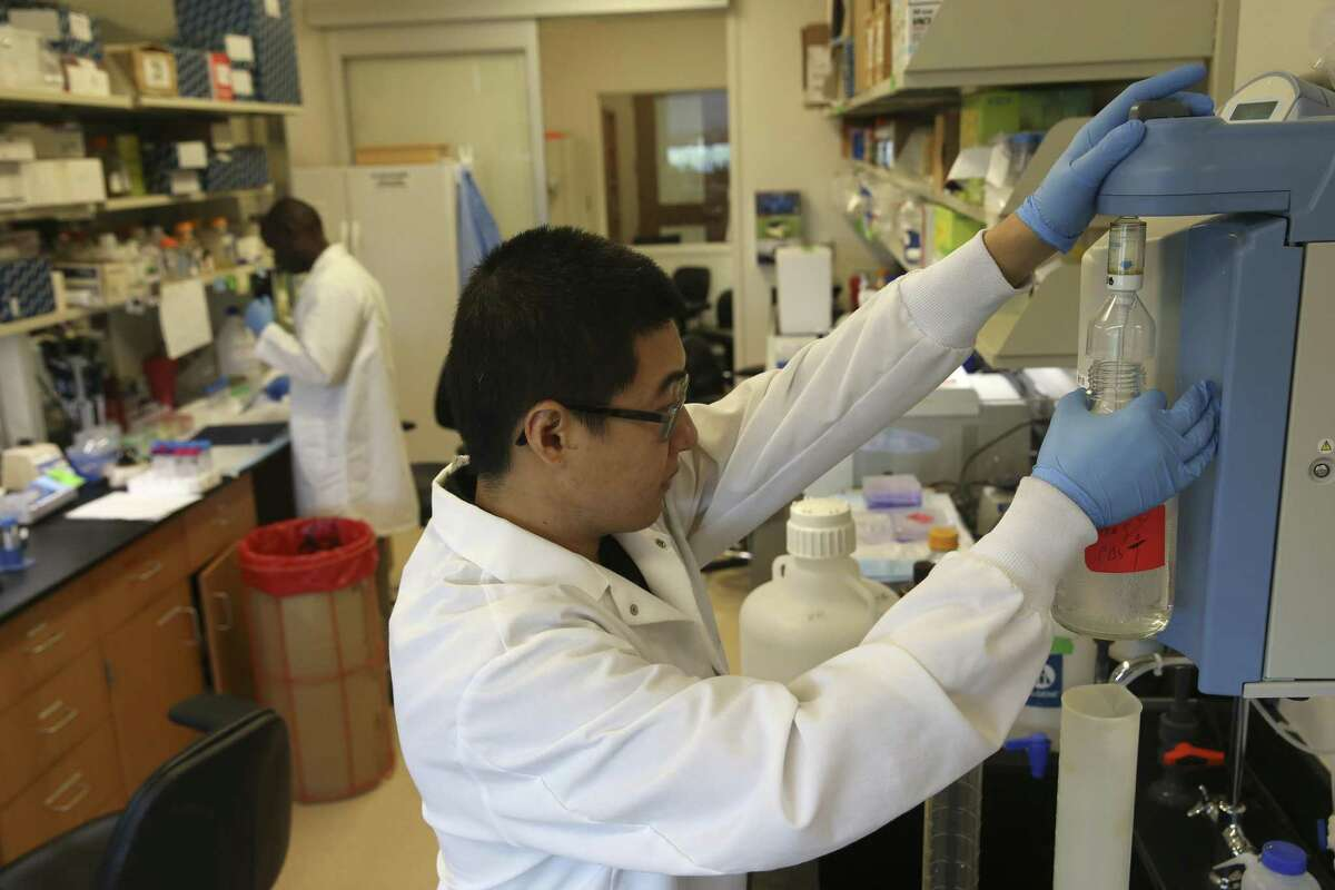 Doctoral candidate Siqi Gong works in a lab at Texas Biomedical Research Institute in this Aug. 7 photo.