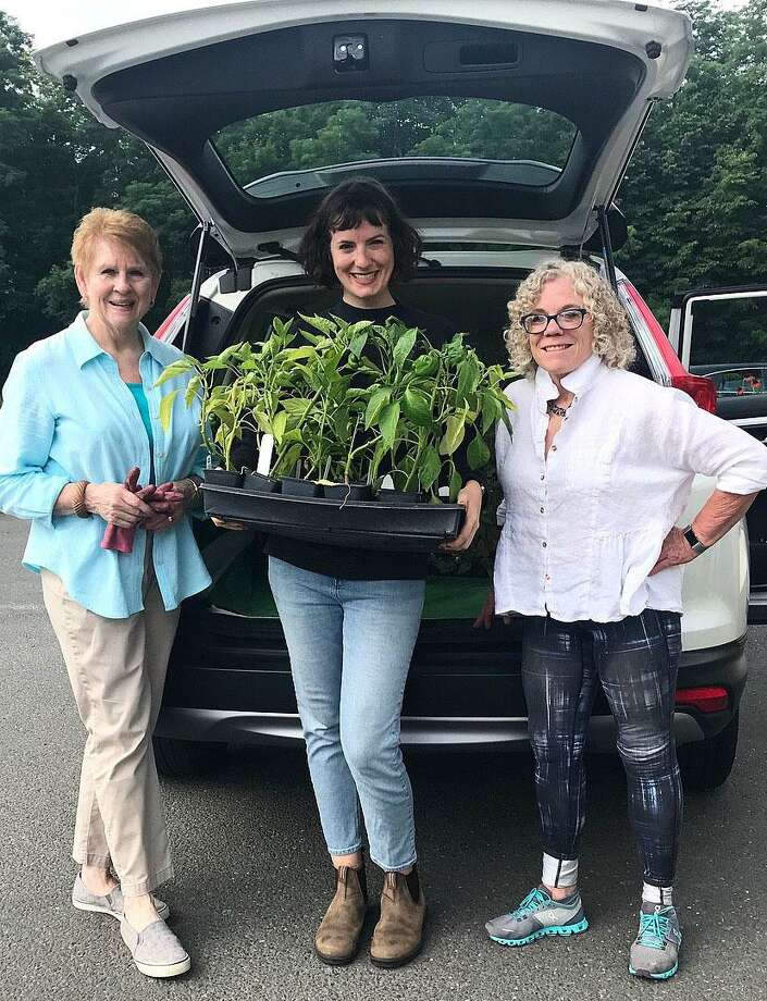 Gail Friedman and Arline Shanley, volunteers from the Victory Garden and New Morning Market employee, Charlotte Chapman gather plants to be donated. Photo: Contributed Photo /
