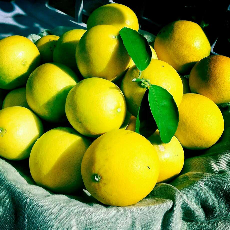 Meyer lemons and other citrus will be discussed during Dan Sebesta's seminar Thursday. Photo: JIM MOLONY, The Journal
