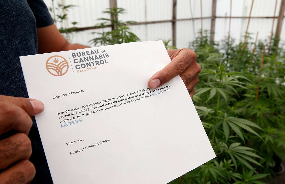 Alexis Bronson holds a notice of termination of his cultivation license emailed to him by the Bureau of Cannabis Control in Oakland, Calif. on Wednesday, Aug. 8, 2018. Bronson's plan to expand his cloned marijuana plant operation came to an abrupt end when his venture through Oakland's cannabis equity program never materialized and has now lost his cultivation permit issued by the state Bureau of Cannabis Control.